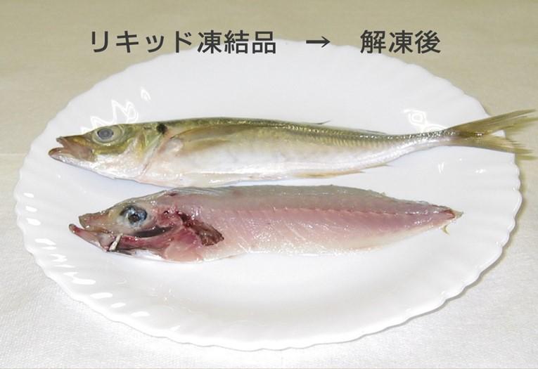 リキッド:魚